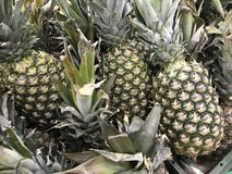 La Russia St Petersburg Lat dell'ananas Ananas comosus immagini stock