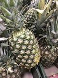 La Russia St Petersburg Lat dell'ananas Ananas comosus immagine stock libera da diritti