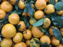 La Russia St Petersburg Lat della clementina Clementina 2 di Ã- dell'agrume fotografia stock