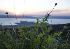 La Russia Tramonto di estate in natura Tramonto fantastico sopra un lago vicino ad un prato verde fotografia stock libera da diritti