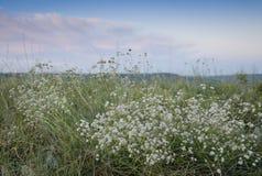 La Russia Tramonto di estate in natura Tramonto fantastico sopra un lago vicino ad un prato verde fotografia stock