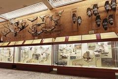 Musée paléontologique Photo stock