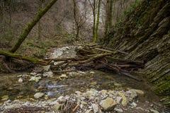 La Russie, Sotchi Autumn Forest Mountain River photos libres de droits