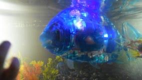 La Russie, St Petersburg, le 8 novembre 2018 ville d'exposition des robots - le robot de poissons nage dans l'aquarium banque de vidéos