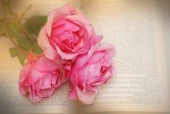 La sépia de bouquet de roses de vintage a modifié la tonalité les fleurs, fleur de floraison dans l'heure d'été Photo stock