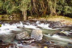 La sérénité tombe au parc de forêt tropicale de Buderim image libre de droits