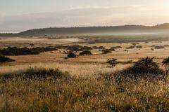 La sabana africana de Bush aclara la niebla de la salida del sol imagen de archivo