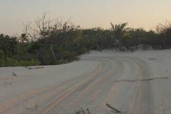 La sabbia e il restinga Immagini Stock