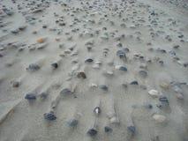 La sabbia sguscia il modello fotografia stock libera da diritti