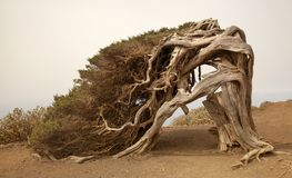 La Sabina, The Juniper tree Stock Photos