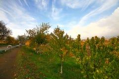 La saison d'automne dans la ville d'Erevan, l'Arménie Photos libres de droits