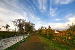 La saison d'automne dans la ville d'Erevan, l'Arménie Photos stock