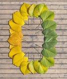 La saison d'automne de transition a coloré des feuilles d'érable sur la table en bois Images stock
