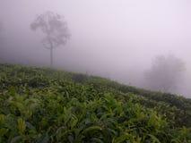 La saison de mousson est pour que les nuages descendent Image libre de droits
