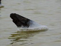 La sal establece en todo que cae en el agua del lago Fotografía de archivo