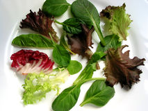 La salade de chéri verdit 1 photos stock