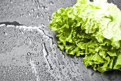 La salade organique verte de laitue avec de l'eau laisse tomber le plan rapproch? sur le fond noir image libre de droits