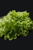 La salade verte Image stock