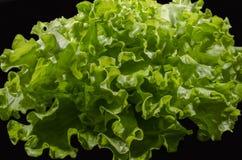 La salade verte Photos stock