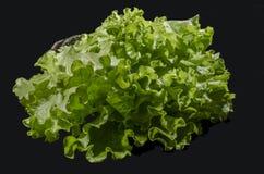 La salade verte Photographie stock libre de droits