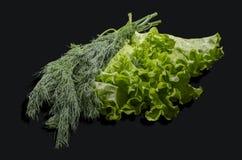 La salade verte et le fenouil Photographie stock libre de droits