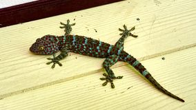 La salamandra verde linda se sienta en la pared fotografía de archivo
