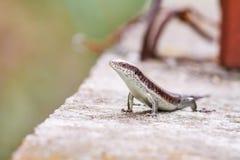 La salamandre se tient grande Photographie stock