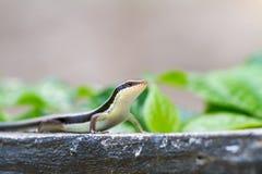 La salamandre se tient grande Photographie stock libre de droits