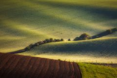 La salida del sol alinea y agita con los árboles en la primavera fotos de archivo libres de regalías