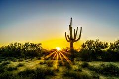 La salida del sol con Sun irradia el brillo a través de los arbustos en el desierto de Arizona foto de archivo libre de regalías