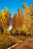 La salida del sol de la trayectoria y del álamo blanco del otoño Foto de archivo