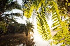 La salida del sol de oro brilla abajo alrededor del lago y del helecho en palmera Imagenes de archivo