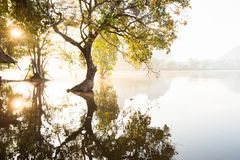 La salida del sol de oro brilla abajo alrededor del lago y de los árboles salvajes Imágenes de archivo libres de regalías