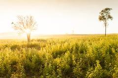 La salida del sol de oro brilla abajo alrededor del prado y del árbol salvaje Imagen de archivo libre de regalías