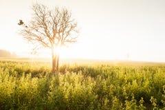 La salida del sol de oro brilla abajo alrededor del prado y del árbol salvaje Imagenes de archivo