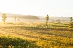 La salida del sol de oro brilla abajo alrededor del prado y del árbol salvaje Fotografía de archivo libre de regalías