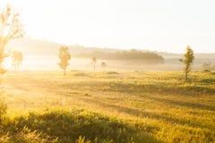 La salida del sol de oro brilla abajo alrededor del prado y del árbol salvaje Fotos de archivo libres de regalías