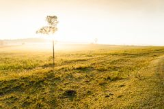 La salida del sol de oro brilla abajo alrededor del prado y del árbol solo Foto de archivo