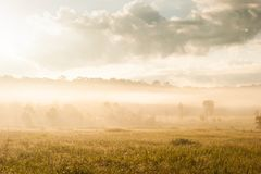 La salida del sol de oro brilla abajo alrededor del prado y del rocío de la mañana Fotografía de archivo libre de regalías