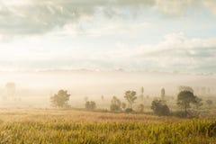 La salida del sol de oro brilla abajo alrededor del prado y del rocío de la mañana Fotografía de archivo