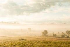 La salida del sol de oro brilla abajo alrededor del prado y del rocío de la mañana Imagen de archivo