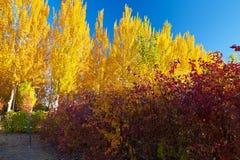 La salida del sol de oro de los árboles Fotos de archivo