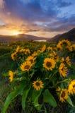 La salida del sol hermosa y los wildflowers en el rowena crest el punto de vista, mineral Fotos de archivo libres de regalías
