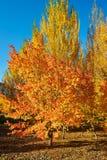 La salida del sol multicolora de los árboles Fotografía de archivo libre de regalías