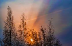 La salida del sol temprana en un cielo azul marino en el fondo de los árboles de abedul oscureció en el abatimiento de la mañana Imagen de archivo