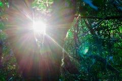 La salida del sol a través de un árbol durante un alza en Praia hace Santinho, polis del ³ de FlorianÃ, Santa Catarina, el Brasil fotografía de archivo libre de regalías