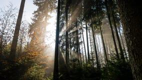 La salida del sol y la niebla es una atmósfera mágica fotografía de archivo libre de regalías