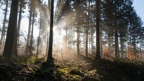La salida del sol y la niebla es una atmósfera mágica imagen de archivo