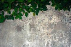 La salita del velcro sul vecchio muro di cemento Immagine Stock Libera da Diritti