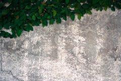 La salita del velcro sul vecchio muro di cemento Fotografie Stock
